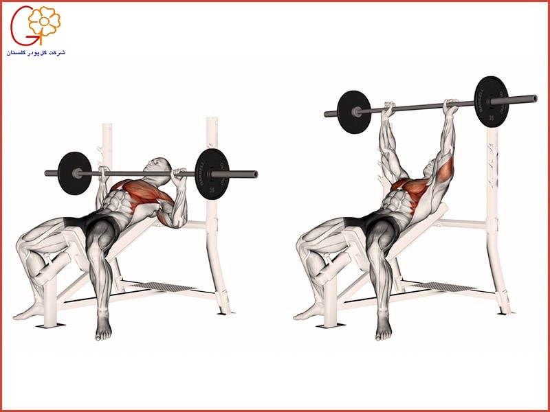 تقویت عضلات بالا سینه