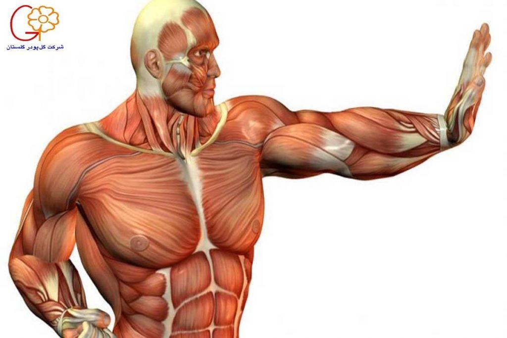 بازسازی عضلات بدن