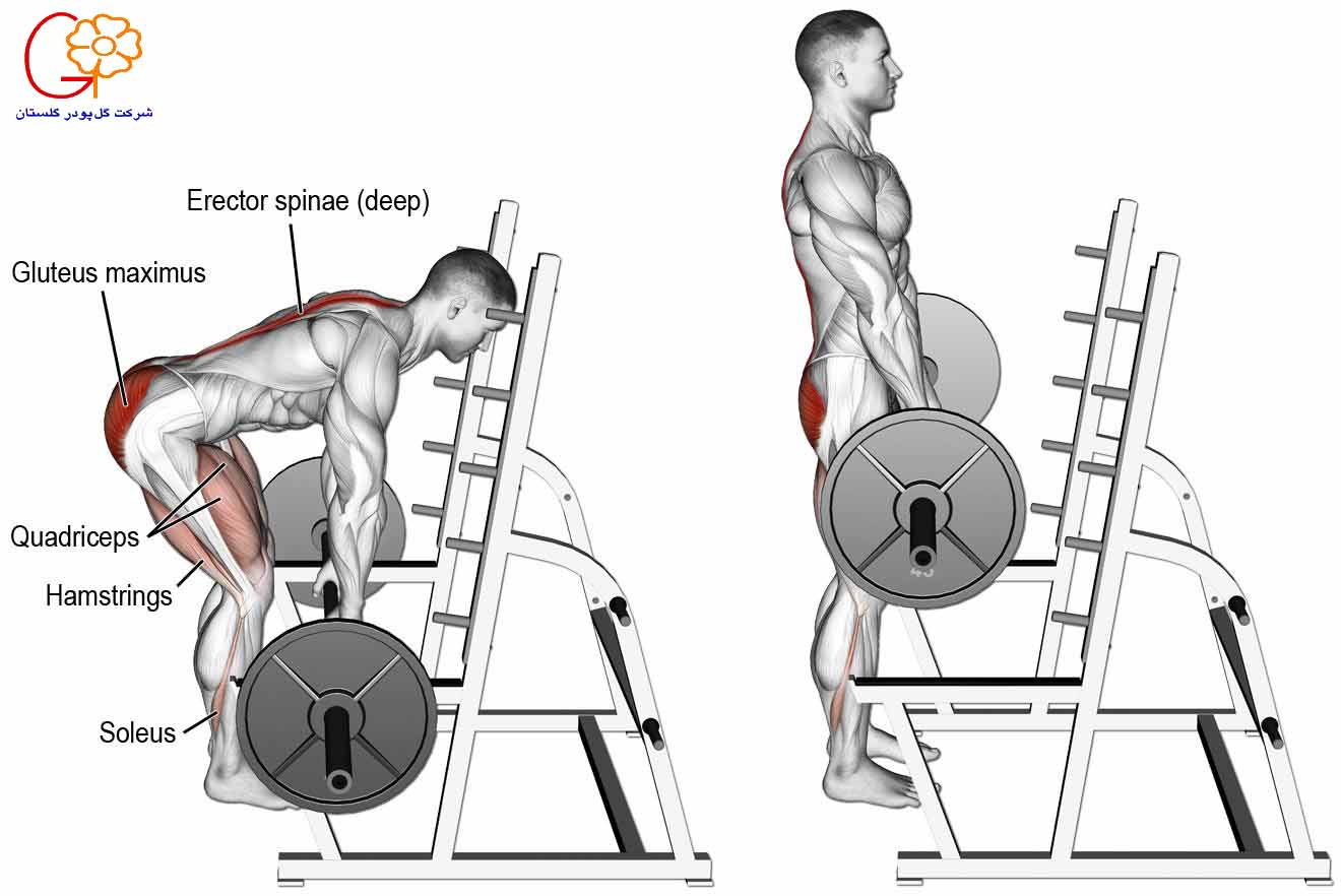 تقویت عضلات کول